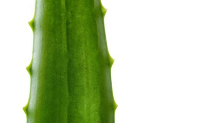 Aloe Vera Health Benefits